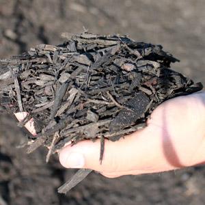 Black Majestic Mulch